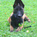 educateur canin strasbourg - conseils en comportements canins