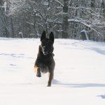 education canine Strasbourg_chien dans la neige