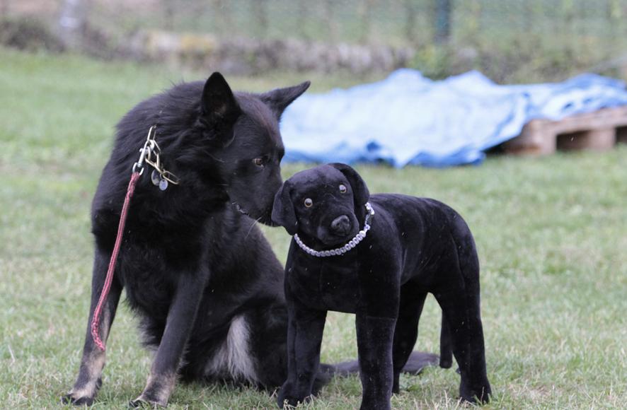 educateur canin Strasbourg berger allemand