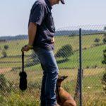 educateur canin strasbourg - chiot berger belge malinois