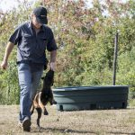 education canine alsace - chiot malinois au travail