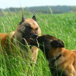 educateur canin strasbourg_communication entre chiens