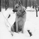 educateur canin strasbourg - chien militaire