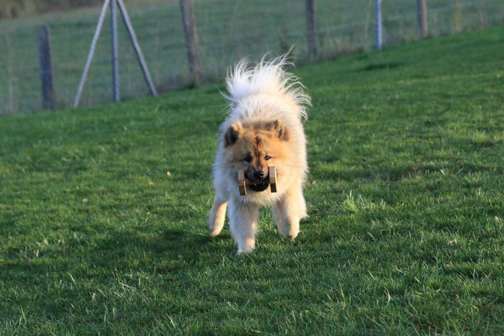 bon sens _Chien eurasier_article éducation canine