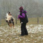 educateur canin strasbourg - berger australien