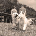 éducateur canin strasbourg