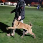 educateur canin bas rhin - marche au pied obéissance