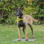 educateur canin strasbourg_entrainement